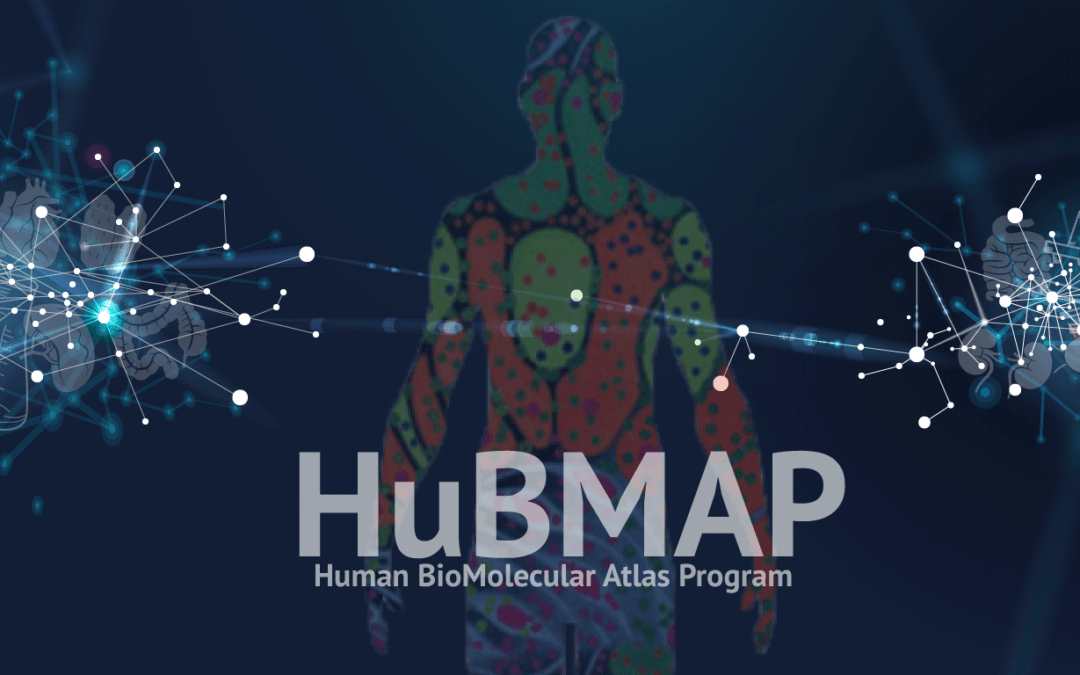 HuBMAP Inaugural Data Release: Detailed Anatomical Data about Seven Human Organs for Scientists, Public